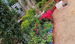 صورة- مشتل حدائق الاندلس _السراج
