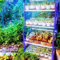 صورة- مملكة الورود لبيع نباتات الزينة