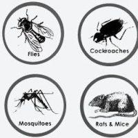 صورة- شركة مكافحة حشرات بالمدينه