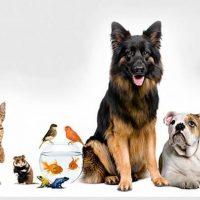 مبيت للحيوانات الاليفة