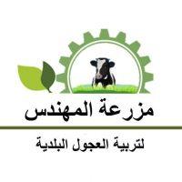 مزرعة المهندس لتربية العجول البلدية