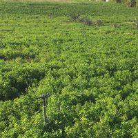 أرض زراعية للبيع في سيوة