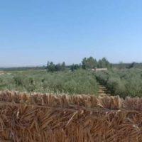 FB IMG 1610968588437 ارض زراعيه للبيع في سيوه