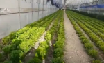 المبيدات الحشرية السائلة والاسمدة العضوية السائلة المفيدة للإنسان والطبيعة