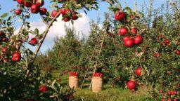 ارض زراعية للبيع في تركيا بساتين الزيتون و التفاح و بساتين الموز و بساتين الأفوكادو عمل مُدار جاهز